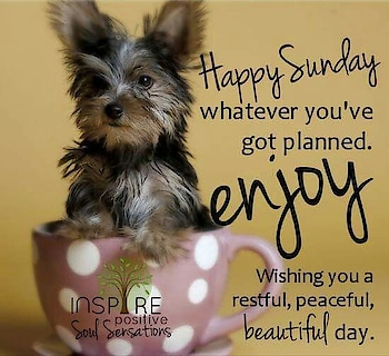 Happy Sunday Friends Enjoying Weekend💕❤️💕 #sundaymood #njoy with friends #quotes #quotesdaily