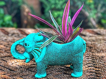 I am a huge nature enthusiast and I love to have plants in my home! Though I have a lot in my balcony and I needed a pretty pot for my indoor decorations. I don't like to use plastic pots and I was looking for some great options in clay pots!  I found my pick from @earthlycreations 😍 Isn't this mint green elephant terracotta planter super cute!! 😍😍 I fell in love with it the moment I saw it!! The quality is superb!!   Happy Independence Day to you all!! 🇮🇳  🧡⚪️💚 #planter #decorativepot #terracottapots #gardening #homedecor #gurgaonblogger