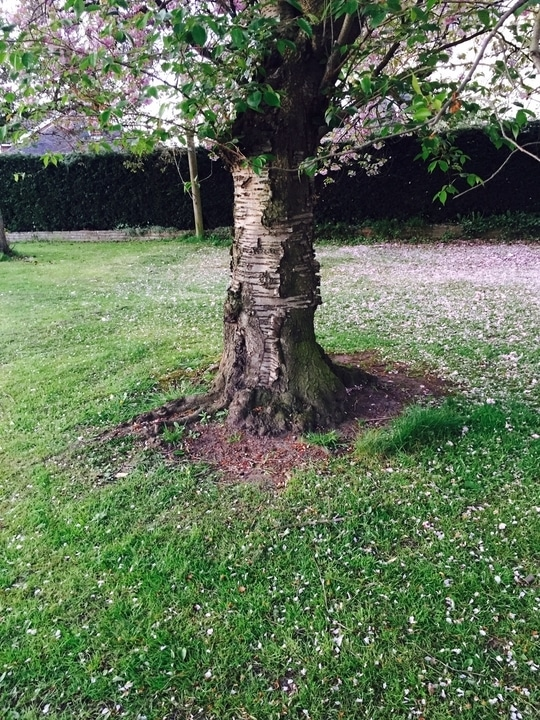 I love natural nature. This is my favourite spot sitting by this old tree. I sit here for hours reading books, painting, watching movies on my tablets and with friends having my tea parties. During spring and summer love the flowers blossoming and the scents of the flowers blossoming everywhere around us.