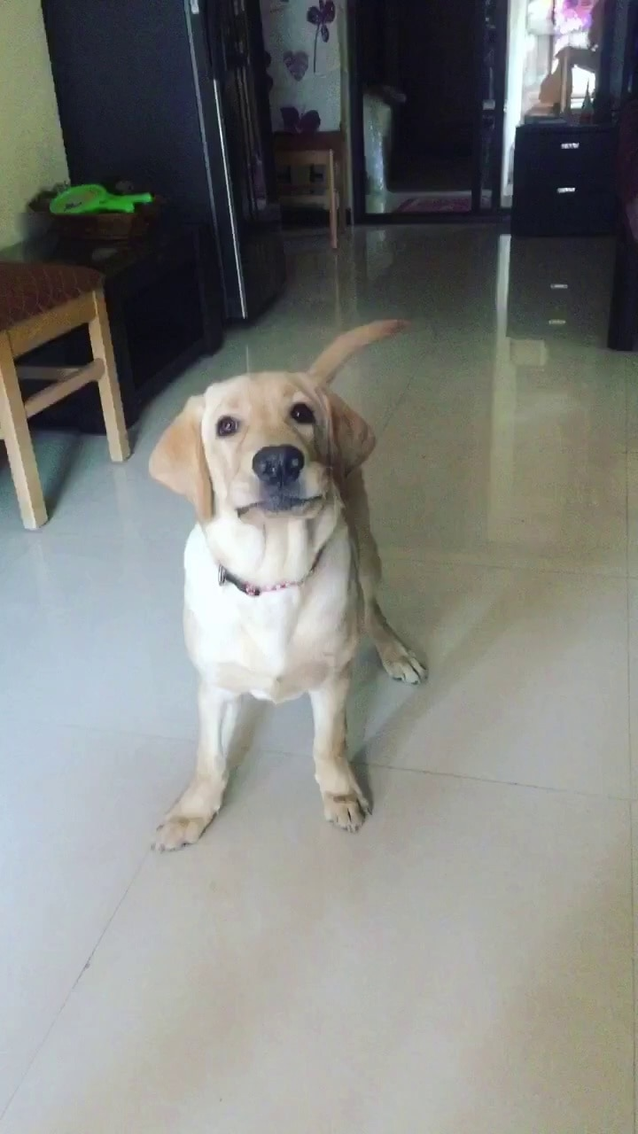 #dog #puppy #pup #TagsForLikes #cute #eyes #instagood #dogs_of_instagram #pet #pets #animal #animals #petstagram #petsagram #dogsitting #photooftheday #dogsofinstagram #ilovemydog #instagramdogs #nature #dogstagram #dogoftheday #lovedogs #lovepuppies #hound #adorable #doglover #instapuppy