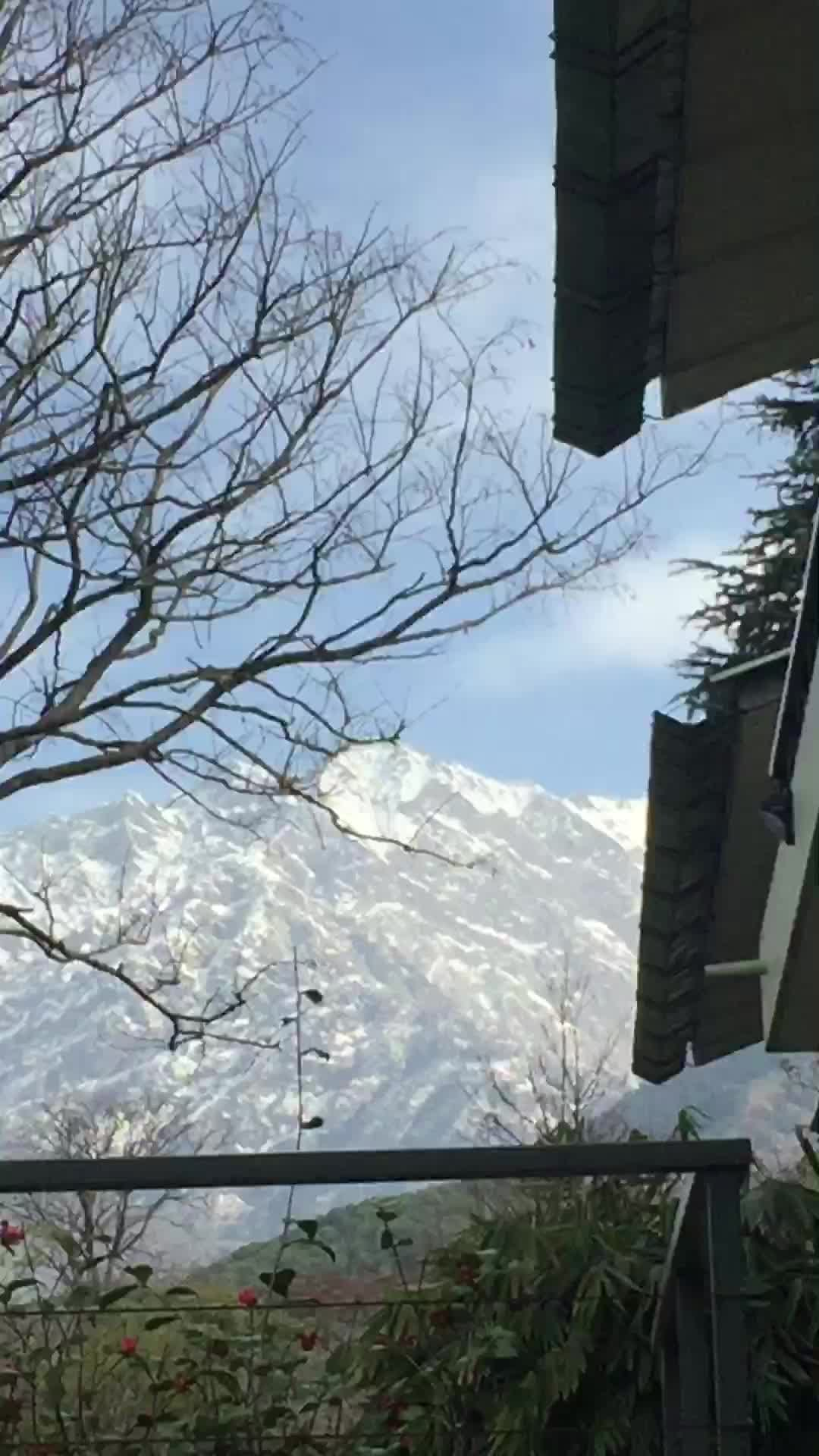 Dhauladhar mountain range view fromThe Norwood  Greens resort.