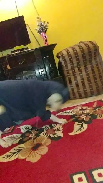 my boy #bruno he wearing my sweatshirt #latepost #followme #delhiboy #roposodiaries #roposofever #doglover #dogsofroposo #instalife #savagesummer