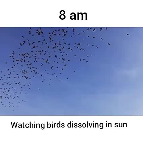 Where did they go?? 😮😮       . . . . . . #birds #goodmorning #video #birdvideo #birds #beautifulmorning #wow #eastindia #east #ilovebirds #home #photo #newvideo #haveaniceday
