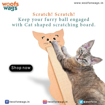 Scratch Scratch! Keep your furry ball engaged with Cat shaped scratching board & also save your furniture by providing your cat with an appropriate and attractive place to scratch and play!  Shop Now: http://bit.ly/2gZkE4Z  #woofsnwags #woof #wags #tail #instacat #scratch #scratchingboard #catlover #catoftheday #ilovemycat #blackcat #catsofinstagram #cats #catstagram #woofsnwagsdotin #cat #my_pet_feature #petlover #petlove #meow #kitten #ilovemycat #kittenlove #catsofinstagram