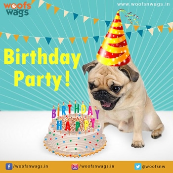 """Every dog has his day , It's your special day Happy Birthday #Dog. Tag your buddy with hashtag #happybirthdaybuddy and get 10% discount on all pet products at www.woofsnwags.in. Hurry! Your #woof is waiting for his #birthday gift! Don't forget to add his pic""  #woofsnwags #woof #woofsnwagsdotin #goofy #birthday #dogbirthday #party #fun #happybirthday #happybirthdaydog #happybirthdaybuddy #gifts #birthdaygifts #birthdayparty #discounts #doglovers #petlovers #cakes #candles"