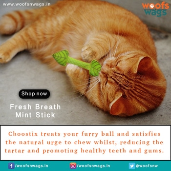 Dental health in kittens, cats, and senior cats is an important part of their overall health. Choostix treats your furry ball and satisfies the natural urge to chew whilst, reducing the tartar and promoting healthy teeth and gums. #freshbreathmintstick Shop Now : http://bit.ly/2xOKXOU #woofsnwags #woof #wags #tail #instacat #freshbreathmintstick #toy #play #fun #activity #health #dentalcare #friends #catlover #catoftheday #ilovemycat #browncat #catsofinstagram #cats #catstagram #woofsnwagsdotin #cat #my_pet_feature #petlover #petlove #meow #kitten #ilovemycat #kittenlove #catsofinstagram