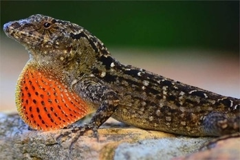 Do you own a lizard? What does it eat? Or get to know here what you can make them eat!  Read: https://askopinion.com/what-do-lizards-eat  #Lizard #reptile #animalkingdom #askopinion