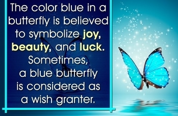 #blue #bluebutterfly #superstition #butterfly