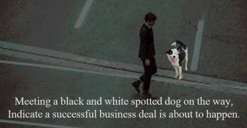 So pray, you meet a black & white dog while going out for a meeting.  #meeting #superstition #blackdog