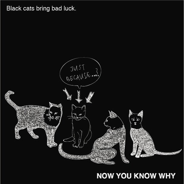 A Black Cat is not visible in dark, therefore causing hindrance in our way.  #superstition #blackcat #cat