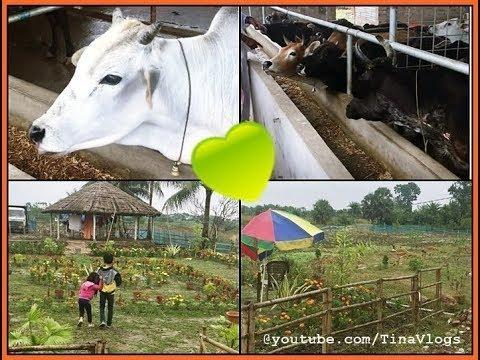 A Visit To Gaushala! ISKCON Sanctuary - Tina Vlogs! #iskcon #gaushala #animals #cows #onelove #beautblogger #lifestylevlogger #childrensday #happiness  #sanctuary #naturlove #birdwatching #nature #adayinmylife #vlog #youtubeindia #youtubecreatorindia