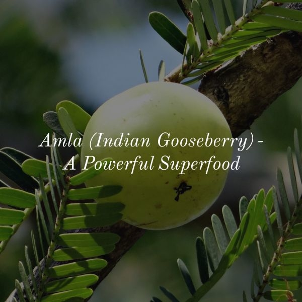 Amla (Indian Gooseberry) has a large number of benefits with its antioxidant, skin enhancing, hair enriching capabilities. It is an effective solution to most of your skin and hair problems.  #synaa #amla #indiangooseberry #gooseberry #beautytips #healthtips