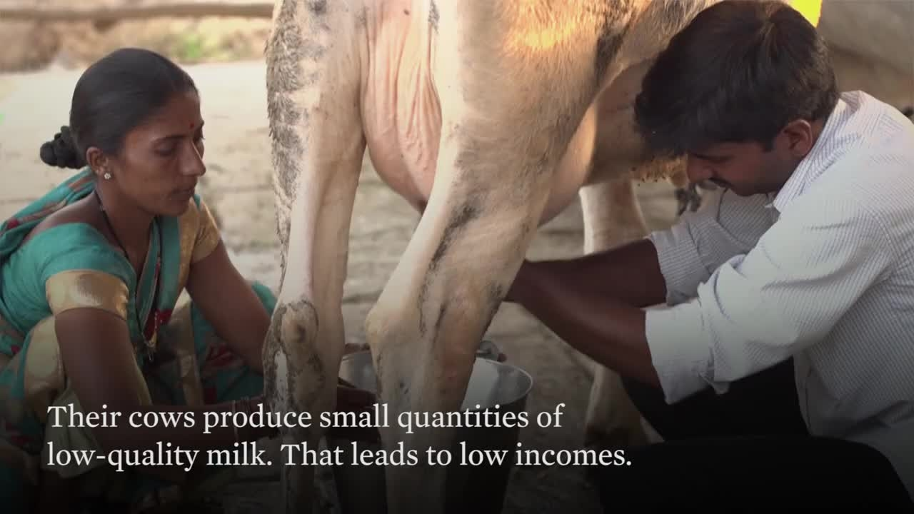 How are female small dairy farmers in India transforming their communities? This International Women's Day, learn what shared value is all about. Source credits: Abott #womensday2018 #indianwomen #inspiringwomen #womenofindia #womenempowerment #womenequality