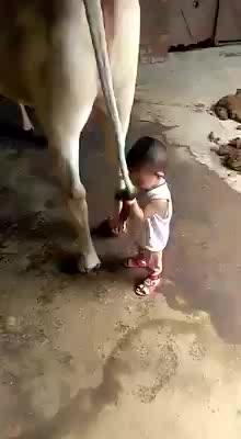 Drinking milk straight from the factory  #mother #motherlove #motherslove #funnykid #funny_video #amazing #amazed #strange #trendy #trendingonroposo #trendingnow #trendinglive #videooftheday #ropo-video #clips #videocitylive #talenthunt  #talenthuntroposo #milk #gaumata #cowlove