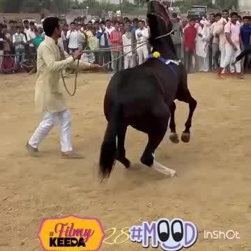 HORSE DANCING #filmykeeda #mood