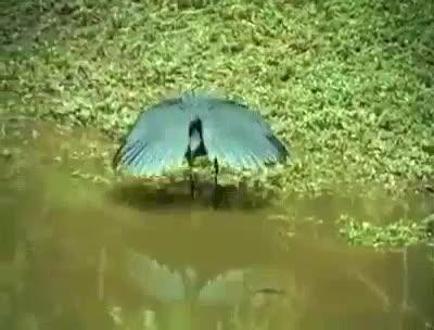 #feathers  #birds  #amazingviews  #goodfeed  #wonderful  #view  #drinking  #waterfall  #wildlifephotography #stayfearless