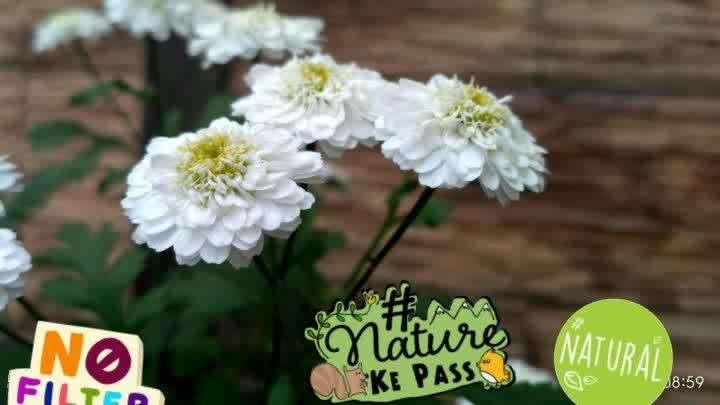 #nature #photogenic #photograph #selfphotography #loveflowers #traveldiaries #traveldiaries #travelphotography #travel-diaries #musafir #riya 😘😍😍 #nofilter #natural #naturekepass