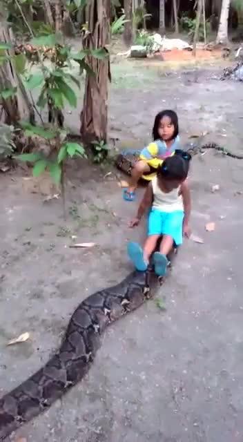 #anakonda