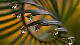 #captured #nature #rainyday
