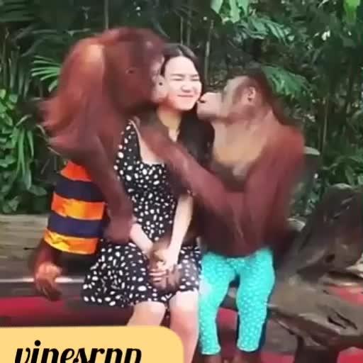 Funny Chimpanzee #fun #funny #kiss #girls