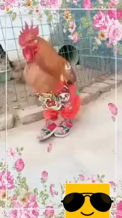 😂😂😂😂so funny Like and follow this video #funny #roposo-funny #funnypictures #funnypic #funnydance #video #ropo-video #thanks-roposo-for-such-a-colourful-video #videogram #videotutorial #himat nahi harna #funnyvideo #funny_videos #gajab