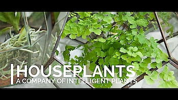 #Houseplants🍁 Contact us📞 9454031272 https://youtu.be/jCQANP-QMPc