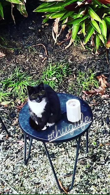 Imma sit on the top of the table and show you who's the boss! - Plitson #neighbourscat #cat #catsofinstagram #cats #catstagram #blackcat #blackcats #blackandwhite #theboss #thuglife #bosscat #bossingaround #catpose #animallover #nzblogger #foodfashionandfunwithsonal #eat #pray #love #live #laugh #stayhappy #stayclassy #stayhumble #stayblessed