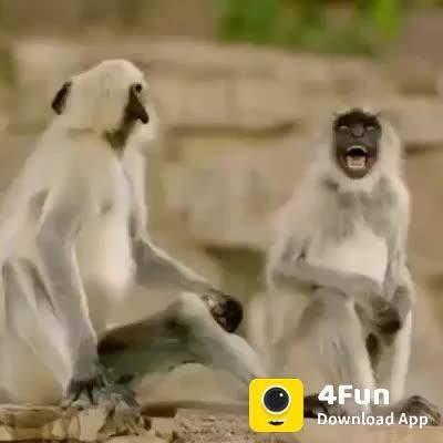 #hahatv #bollywoodcomedy #beatschannel #funnyclip #comedyvideos