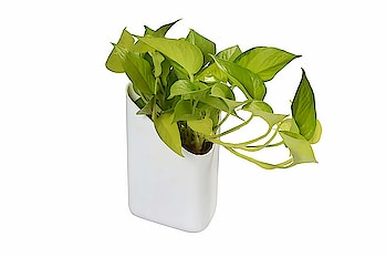 Blume Prism Indoor & Outdoor Wall Hanging Planter Pack of 12  High performance decorative outdoor/indoor planter. Beautiful design adds a charming touch to any patio or deck. The weather-proof and ultra-tough construction allows you to enjoy your planter all year long. The UV inhibitors within the resin allows for a long lasting fade-free performance. Will not get damaged with rain, sun light or even snow  Buy Now:-  https://amzn.to/2P8Mj0n