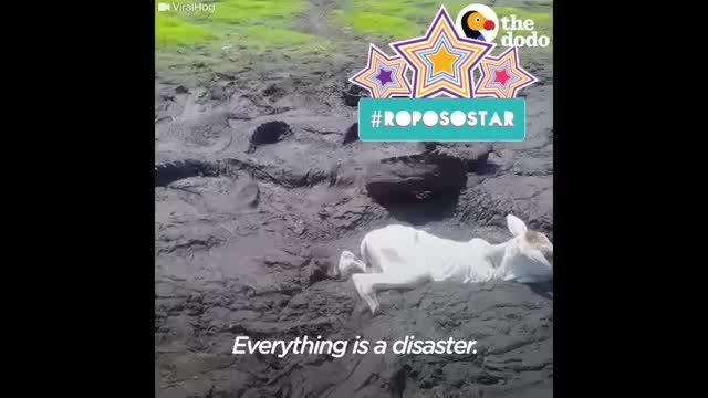 really risking life 👏👌 #roposostar