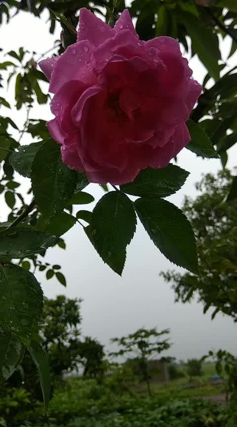 #flowers #flower #igscflowers  #floral_splash #petals #garden_explorers #total_flowers #macroflowers_kingdom #mta_flowers #superb_flowers #blossom #sopretty #flowerzdelight #bestflowerspics #snypechat #flowerstagram #flowersofinstagram #macro_brilliance #flowerslovers #macrophoto #kings_flora #floral #florals #tv_flowers #flowermagic #instablooms #bloom #awesome_florals #flowerpot #floweroftheday