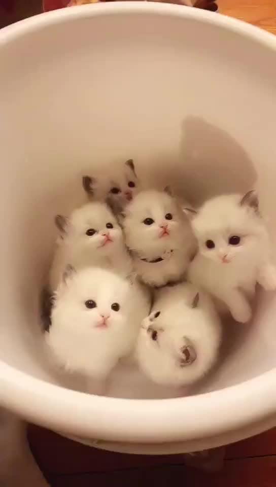 cute kittens 😘😘 #cutekittens #favourite filter #snapchat #favouritefilter #favourite #cutest #cute #filter #cutecat #cat #bblogger #vlogger #makeupaddict #youtuber #indianyoutuber #indian  #trendeing