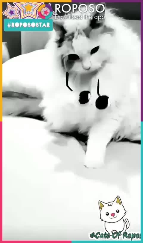 #catsofroposo🐈🐈🐈#superb😂😂😂#killer🍴🍴🍴#meowwww😺😺😺😺 #roposo-funny😗😂😂😂#cuteness-overloaded😍😍😍😍#coolstuff😎😎😎😎