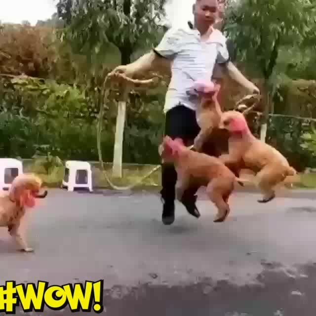 🐶 #cute puppies #skipping #petslove #wow