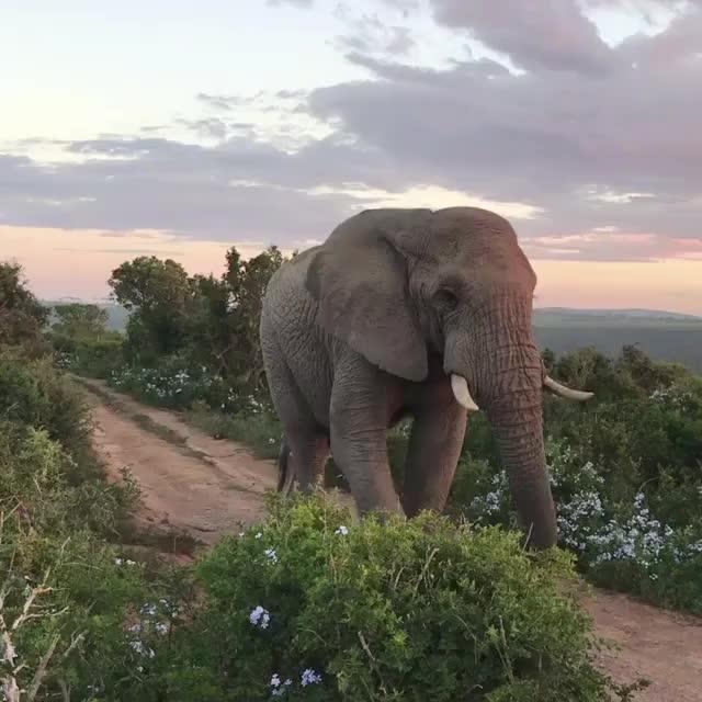#wowchannel  #elephantprint
