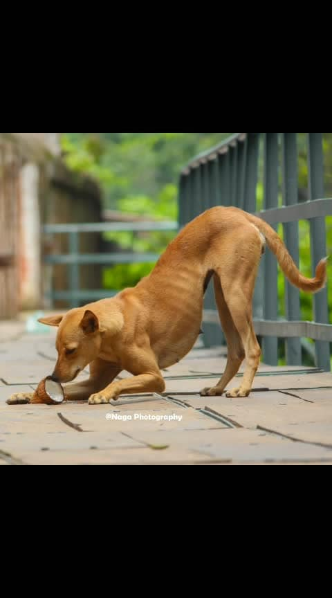 #photo #photographylovers #photographyeveryday #love-photography #dog #dogs #streetdog