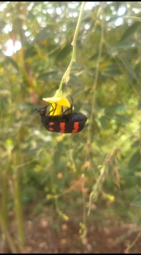 #bugs