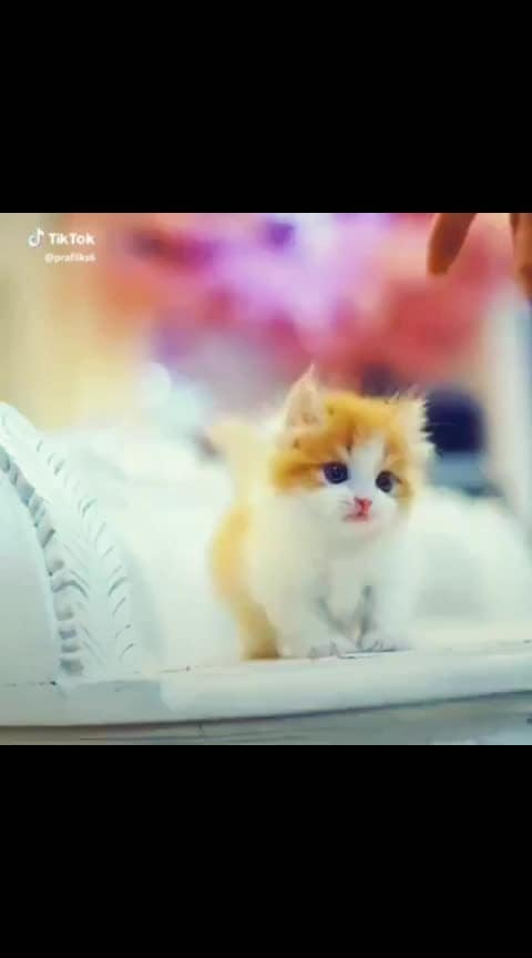so cute ❤ ❤ 😘 #catsofroposo #cat #kittens