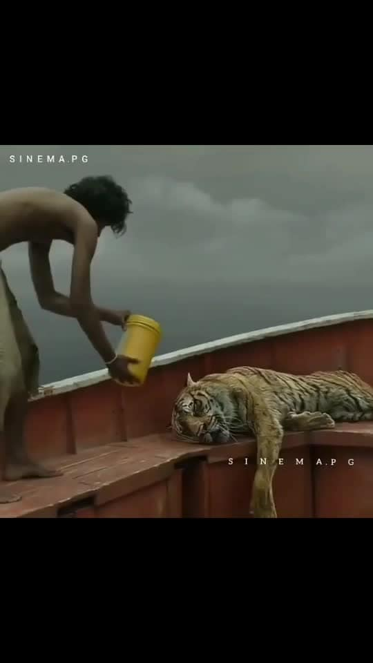 Life of Pi #theviralfeed #feelinggood #bakinglove #love #lonley #viral #haha-tv #roposostar #beats #gabru #feelgoodlookgood #natgeo #wow #news #love-is-only-love #animal