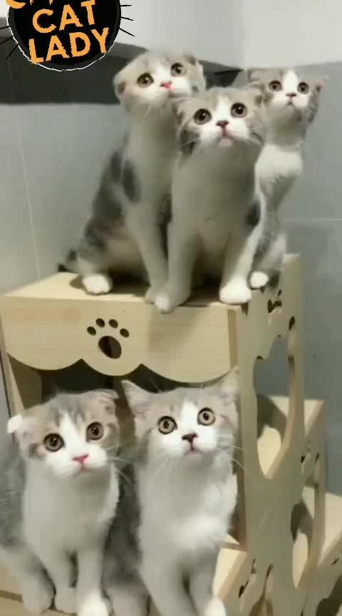 crazy cats #cats #animal #cuteanimals #soroposo #soroposolove #funnyjokes #funny #be_fashionable #be_in_trend #bollywooddialogue #non-vegjokes #nonvegjokes #mumbai