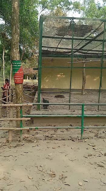 #deerpark  #subornachatterjee