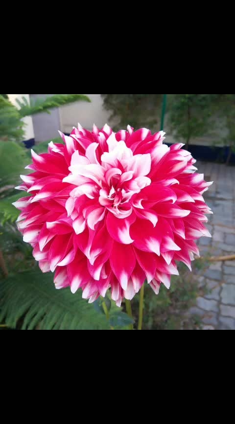 #photodaily #photooftheweek #flowers #candidphotography #candidshot