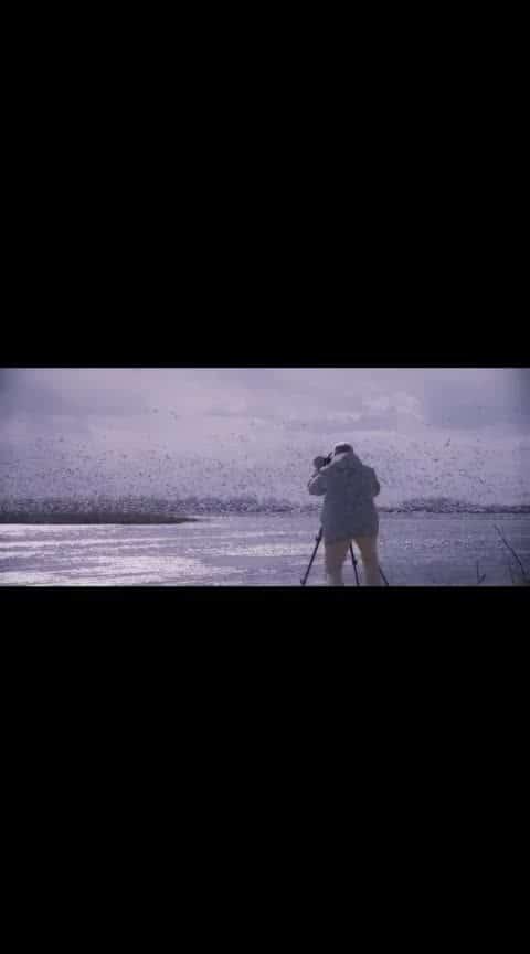 #2.0  #song #tamilsong #rajinikanth #arrahman #amaing #beautuful #birds #love