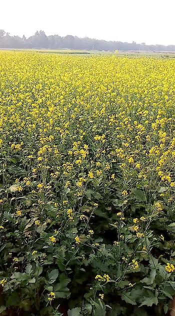 #flowerstagram #flowers #yellow #roposo #roposobeats