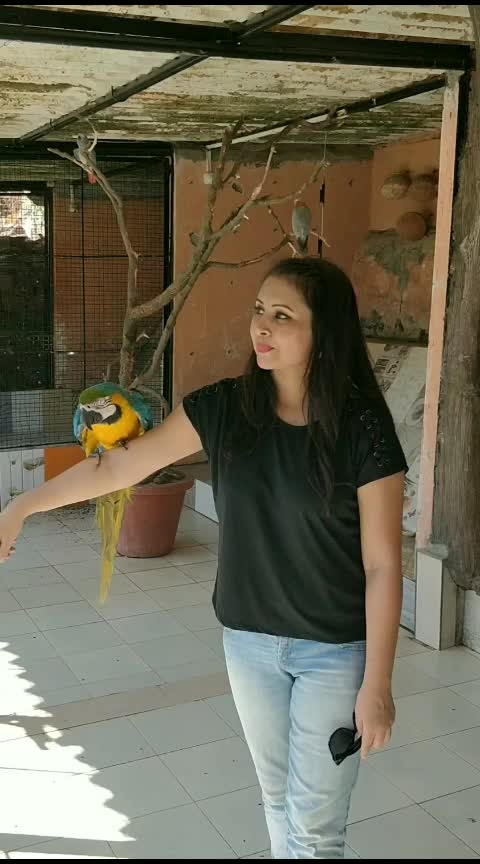 #roposo #roposorisingstar #macaw #roposoness #soroposo #soroposogal #soroposolife #birdlove #weekend #indian #indianyoutuber #punjabi #kaurtips