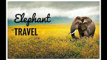 Elephant travel  🐘 😍 Be silent 😨 | Travel world #beats #roposo-beats #beat #love-status-roposo-beats #beatschannel  #awesupply #athomeintheworld #letsgoeverywhere #discover #explore #fromwhereyoudratherbe #passionpassport #travelawesome #neverstoptravelling #wanderlust #travelinspiration #travelstoke #letsgoeverywhere #doyoutravel #lifewelltravelled #travelgram #worldlust #exploringtheglobe #globe_travel #beautifuldestinations #lonelyplanet #traveladdict #traveldeeper #bestvacations #wonderful_places #amazingplaces #beautifulplaces #timeoutsociety #coffeewithasliceoflife #bbctravel #forbestravel #travelgram #tourism #instago #passportready   #ilovetravel #writetotravel #instatravelling #instavacation #travelblogger #instapassport #postcardsfromtheworld #traveldeeper  #travelling #trip #traveltheworld #igtravel #getaway #instago #travelpics #tourist #wanderer  #travelingram #mytravelgram #visiting #travels #travelphotography #tagsta_travel #arountheworld #tourist#solotravel #instago #ig_worldclub #worldcaptures #tourism #worldplaces #worldingram #traveller #traveler #hotel #luxuryhotel