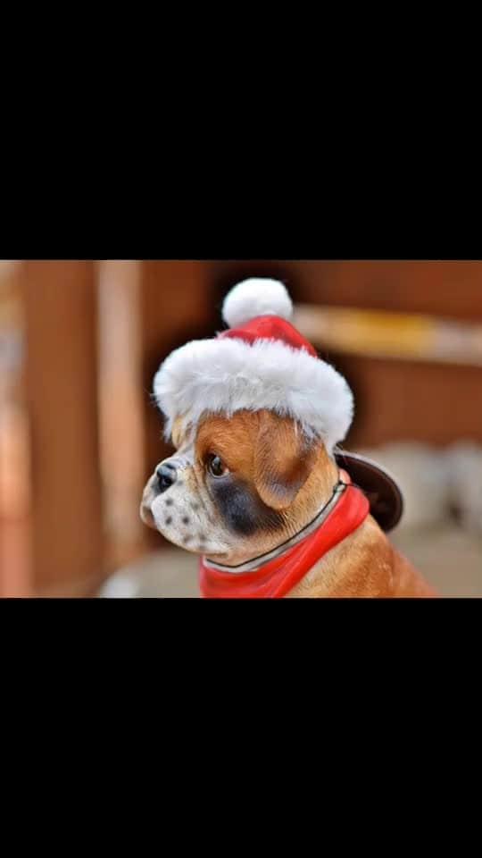 Finally found my kind of Santa... 🎅Ho Ho Ho 😀😀😀 Love M #ChefMeghna #DogLover #hohoho #hohoho🎅 #Christmas #santa #santaclaus #seasonsgreetings #itschristmas #xmas #merryxmas #merrychristmas