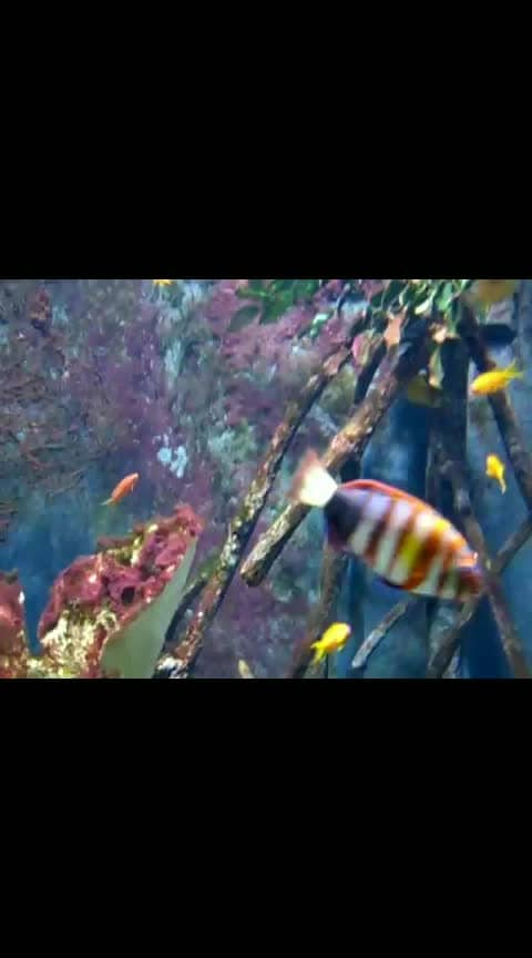 #fishes #colorfullife