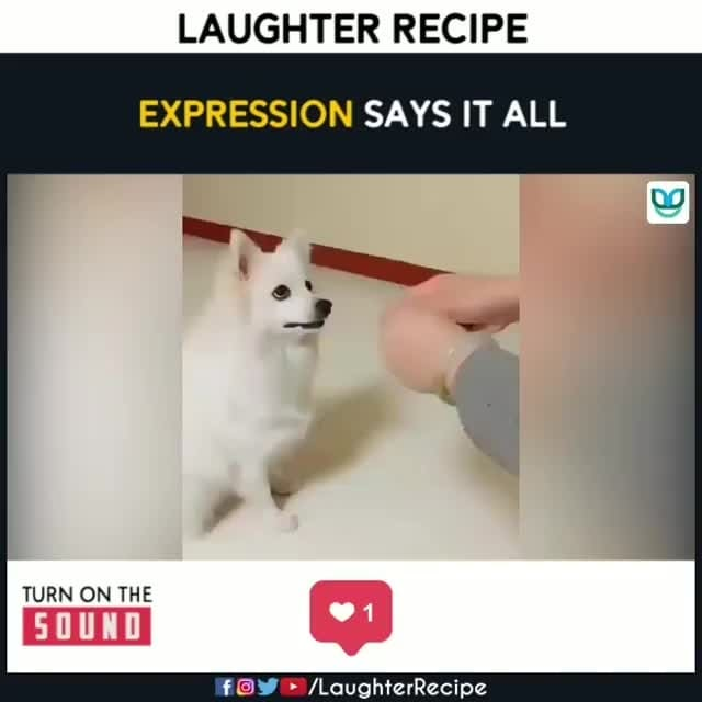 Laughter Challenge 😂🔥 . . Follow us on Roposo #laughing #laughingoutloud #laughter #challengeaccepted #dogoftheday