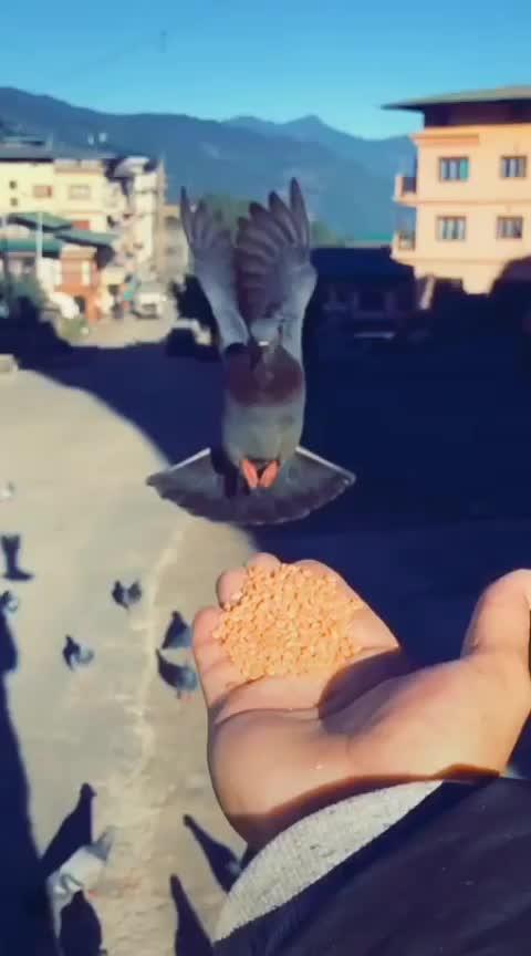 #birdlove #roposo-wow #wowchannels
